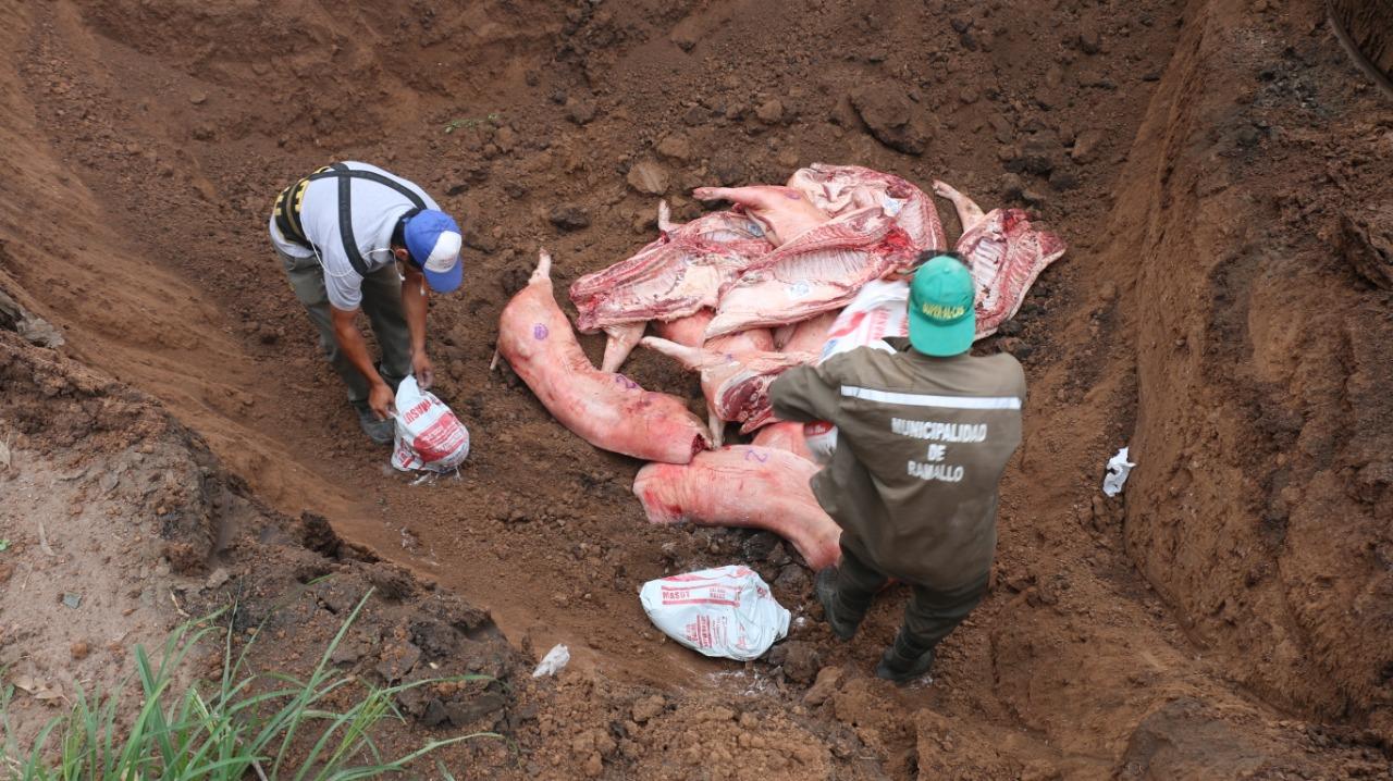 En un operativo en conjunto, la Secretaría de Gobierno de la Municipalidad de Ramallo y la Patrulla Rural procedieron al decomiso de 30 medias reses de cerdos de 42 kilos cada una.
