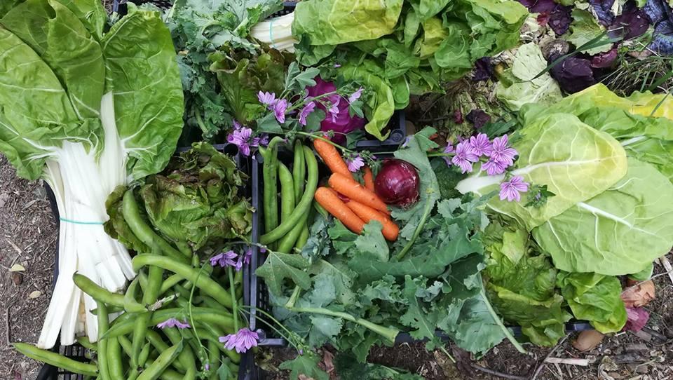 Taller de huerta agroecológica para la infancia