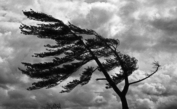 El Servicio Meteorológico Nacional emitió un alerta para el centro, norte y sudeste de la provincia de Buenos Aires, Ciudad Autónoma de Buenos Aires y río de la Plata, por fuertes vientos con ráfagas.
