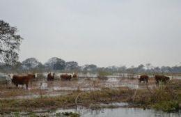 Los ganaderos decidieron retirar los animales.