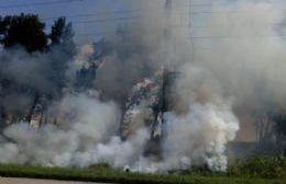 El fuego se extendió a lo largo de 5 hectáreas.