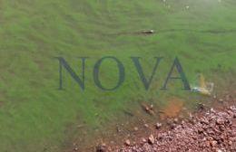 El agua del Paraná repleta de cianobacterias. (Foto: NOVA)