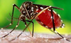 Desde el Hospital Jos� M. Gomendio informaron acerca de la prevenci�n contra el mosquito del dengue y las correspondientes medidas que tomaron para paliar la enfermedad.